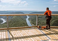 Discover special places: Treetop walk